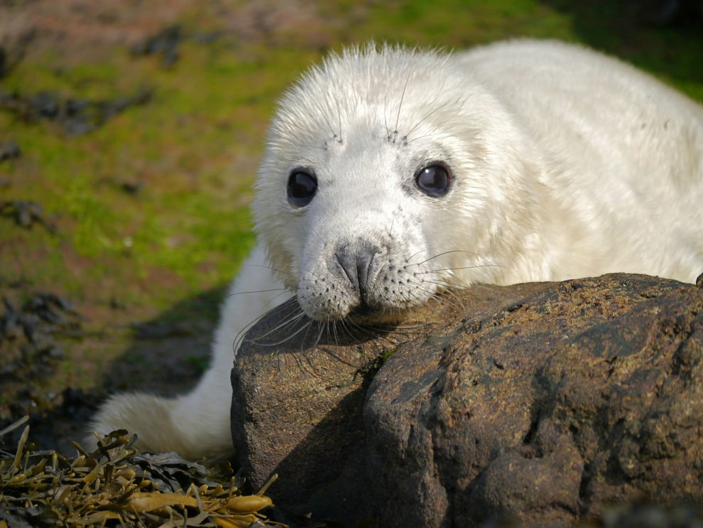 Visit baby seals on the Monach Islands, North Uist.