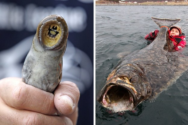 22 pictures that will make you say damn nature you scary