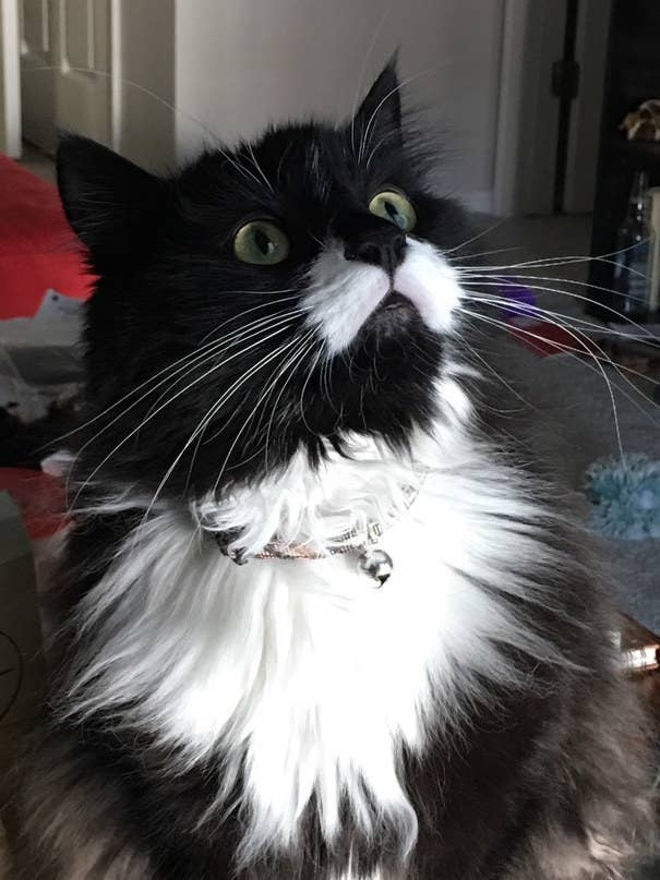 54 Pictures That Will Make You Want A Black-And-White Cat Immediately