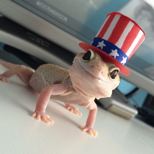 Geckos are also immensely cool.