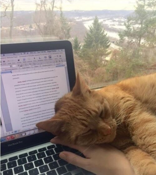 Sleeping on your laptop when you're trying to work.