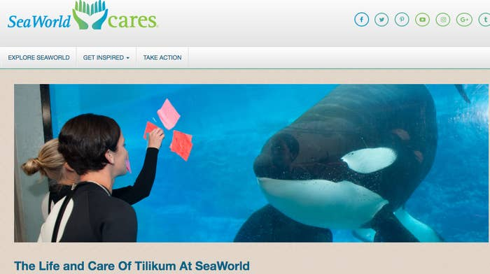 """""""Tilikum's life will always be inextricably connected with the loss of our dear friend and colleague, Dawn Brancheau,"""" the company wrote. """"While we all experienced profound sadness about that loss, we continued to offer Tilikum the best care possible, each and every day, from the country's leading experts in marine mammals,"""" it added. """"It's important to remember that Tilikum lived a long and enriching life while at SeaWorld."""""""