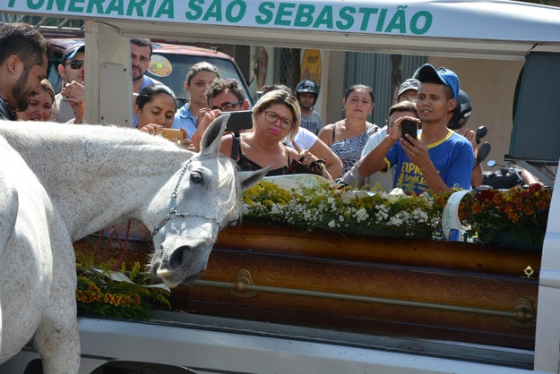 At the service, something remarkable happen. A visibly distraught Sereno gently touched his head against the side of Lima's coffin, and whined and sighed as a sort of goodbye to his beloved owner. Attendees were shocked at the horse's earnest show of emotion.
