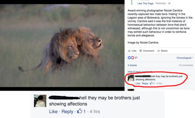 When someone argued that these gay lions were just bros.