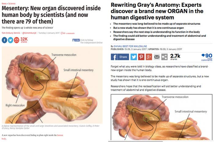 A New Organ Has Not Been Discovered In The Human Body