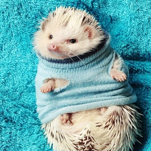Image result for animals in sweaters