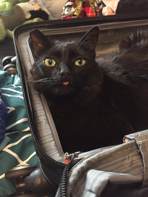 Getting in any suitcase as soon as you open it.