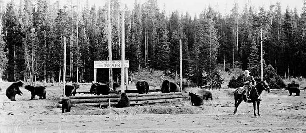 """National parks used to have something called """"bear shows,"""" which basically consisted of tourists watching bears eat out of open garbage dumps at night."""