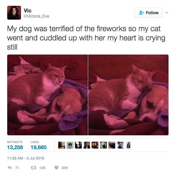 This loving cat: