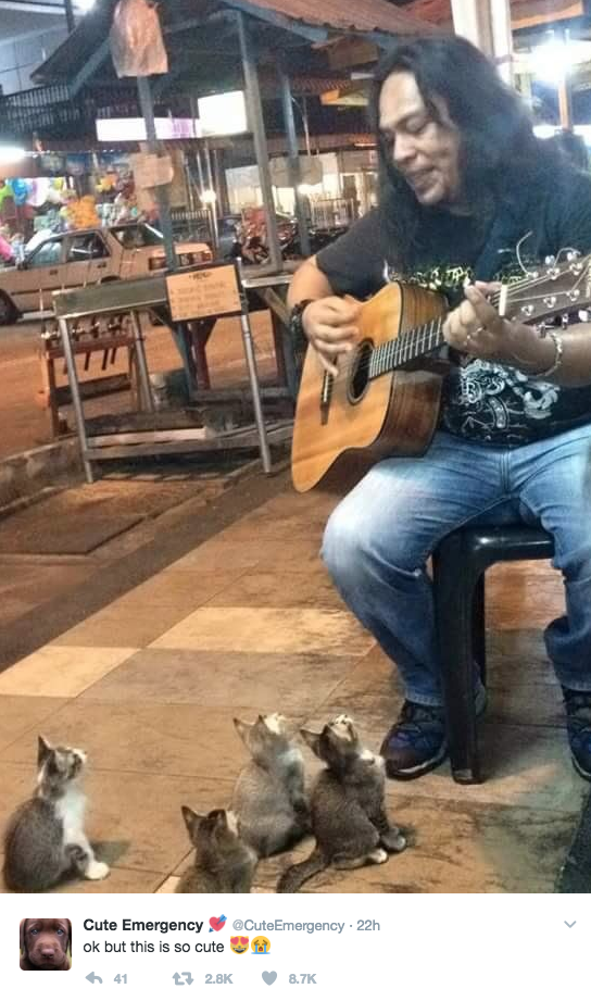 These baby kittehs just enjoying a tune: