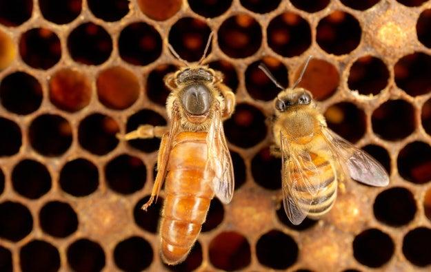 BEES, DUH