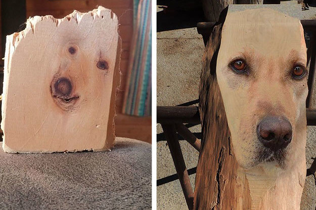 People Canu0027t Stop Laughing At This Plank Of Wood That Looks Like It Has A  Dog Trapped In It