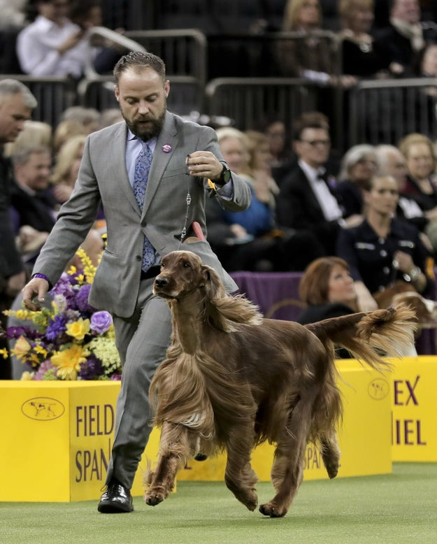 Adrian, an Irish setter, came in second.