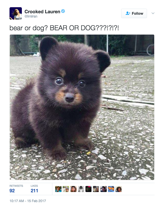 ADORABLE, RIGHT??!!?!?! There's only one problem. No one can decide if it's a bear or a dog.