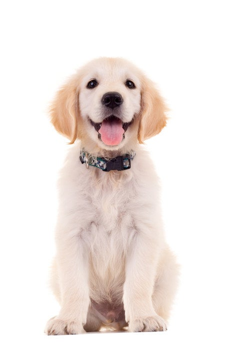 Image result for picture of a dog