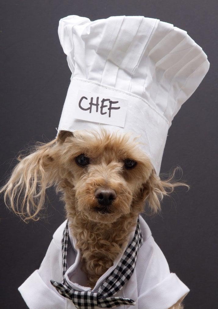 Atribuições: Observar atentamente o cozinheiro.Desvantagens: Apesar de serem ótimos observadores, os cachorros em geral não chegam a aprender nenhuma técnica de cozinha. E pode ser que o interesse deles seja outro...