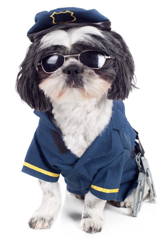 Atribuições: Latir quando ouve um bandido se aproximando e combater o bandido.Desvantagens: Os cachorros costumam se enganar — quase nunca é um bandido. E, quando é bandido mesmo, o máximo que eles costumam fazer é lamber a cara do bandido e pedir pro bandido jogar a bolinha.