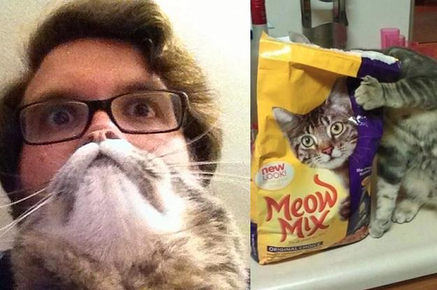 25 Katzenfotos, die im perfekten Moment gemacht wurden