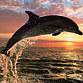 dolphin186