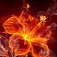 Fireflower16