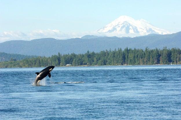 YEP, ORCAS