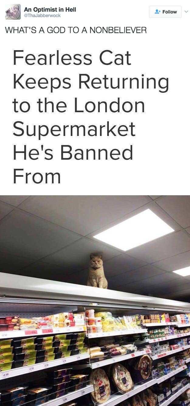 People Who Prove Not All Heroes Wear Capes - Fearless cat keeps returning to the london supermarket hes banned from