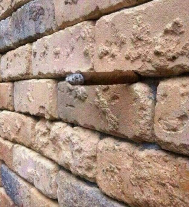 Este muro...
