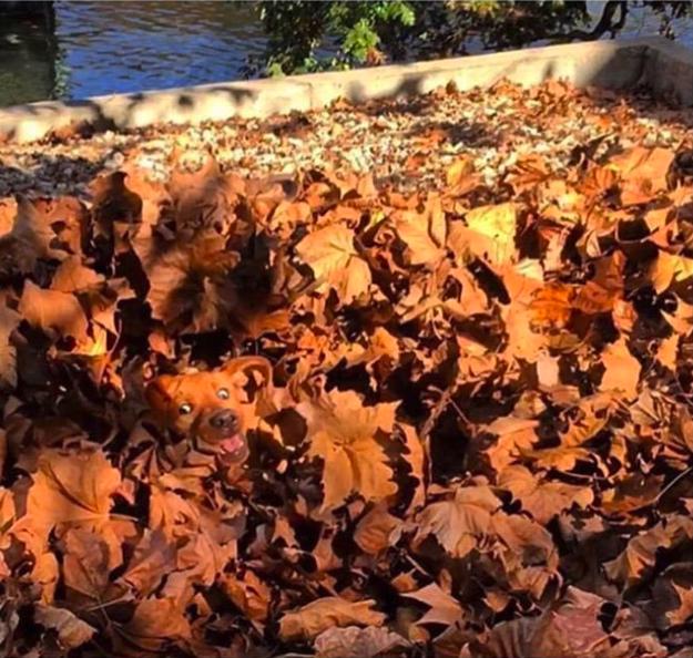 Y este montón de hojas...
