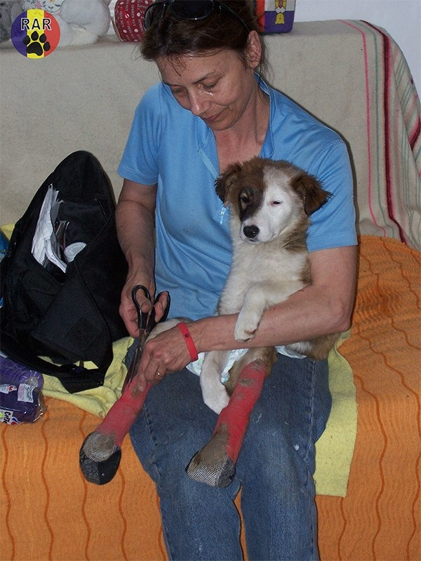 Even though most of the places in Romania don't allow dogs, Nancy sneaked the pup in her hotel room and extended her trip in order to take the dog to the vet.