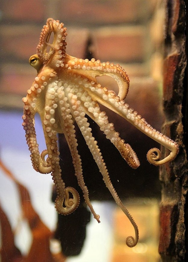 These be-tentacled sea creatures are known for being super smart and also—let's face it—mildly creepy.