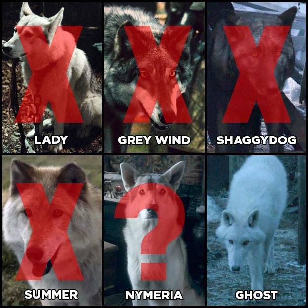 """Tudo bem. Vamos então lembrar como estavam as coisas em relação aos lobos gigantes de """"GoT""""... Ah, É MESMO – tirando o Fantasma, TODOS ESTÃO MORTOS."""