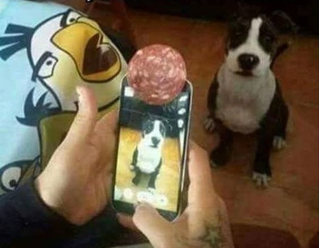 This foolproof way to get a good photo of your dog.
