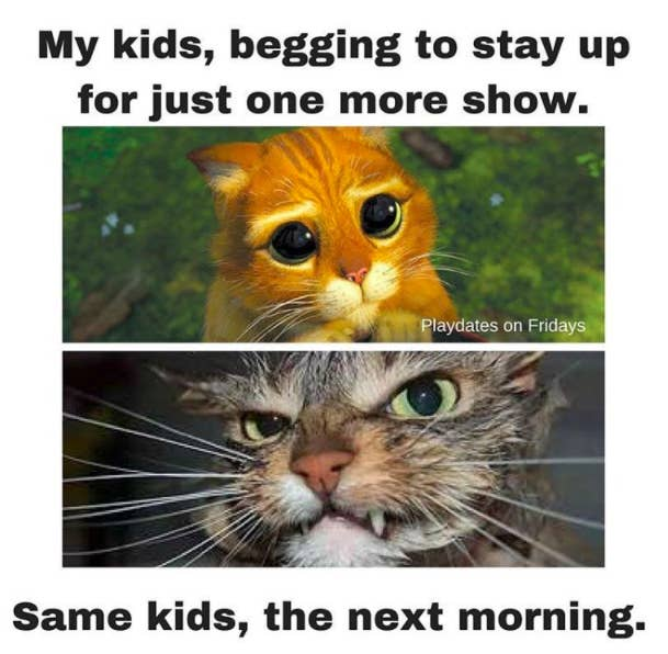 Parenting Memes That Will Keep You Laughing For Hours - 20 of the funniest i dont own a cat moments that ever happened to people