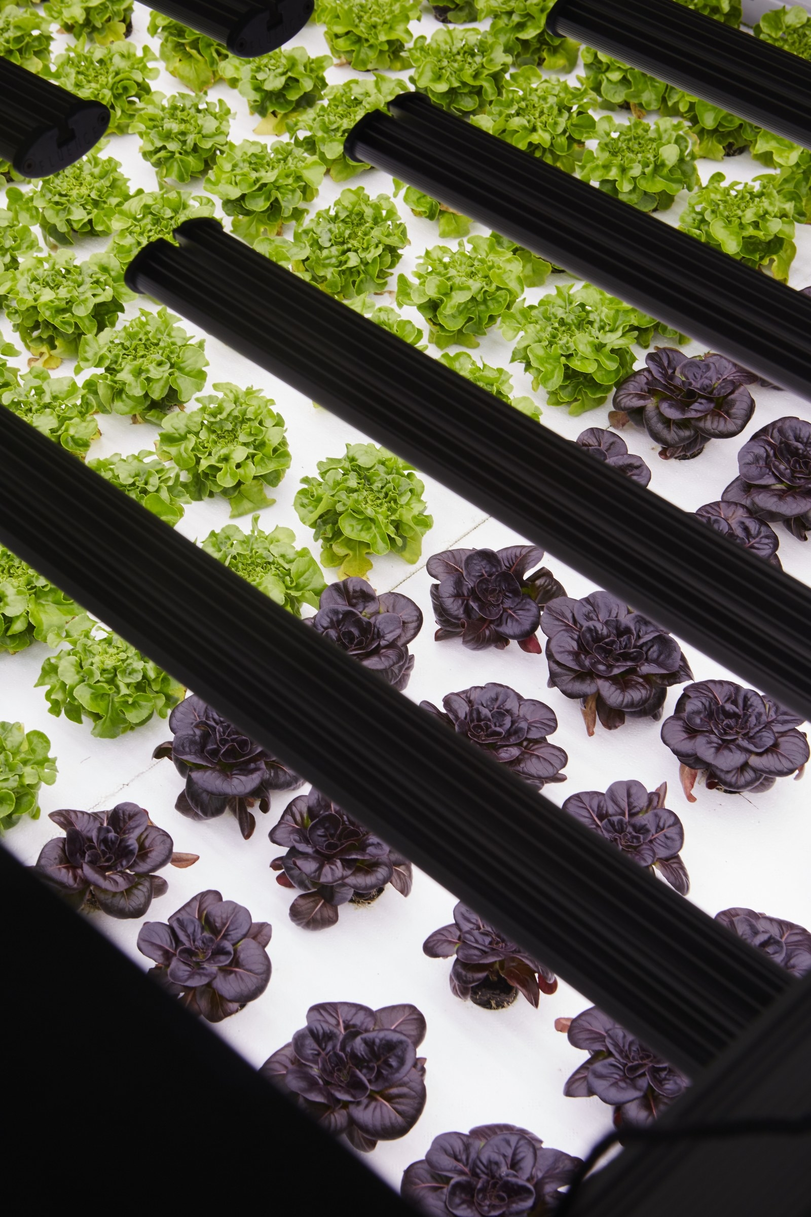 Inside The Computerized Lettuce Factory Of The Future