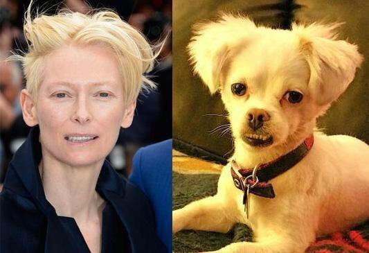 Y aunque ni fue a la ceremonia, a Tilda Swinton la compararon con este perrito.