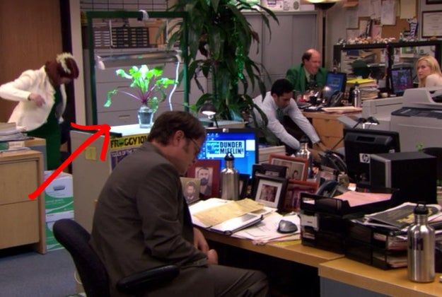 During Season 6, Dwight was growing a beet at his desk.