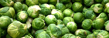 If You Already Know How Brussels Sprouts Grow, I Don't Recommend Reading This Post