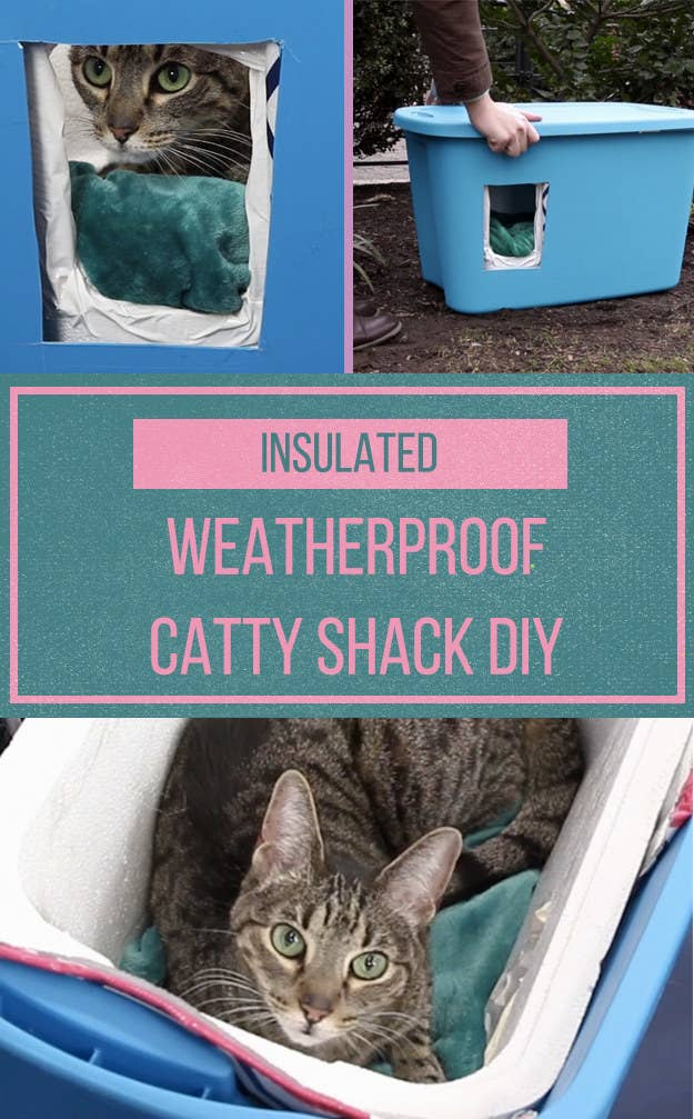Make This Weatherproof Insulated Cat Shelter To Keep Your