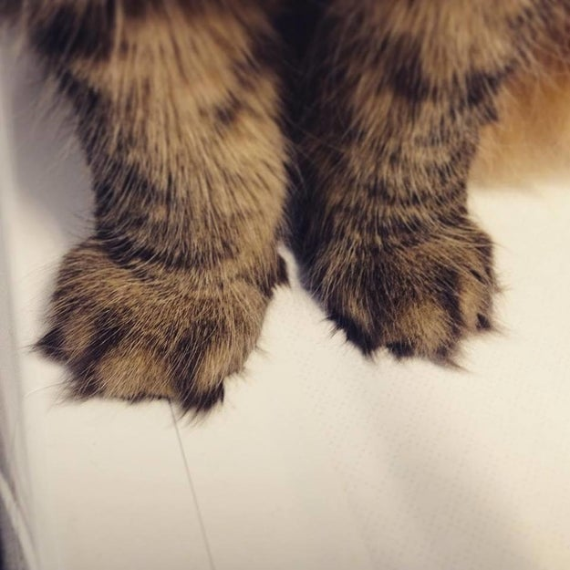 Perhaps you like your paws a little fluffier?