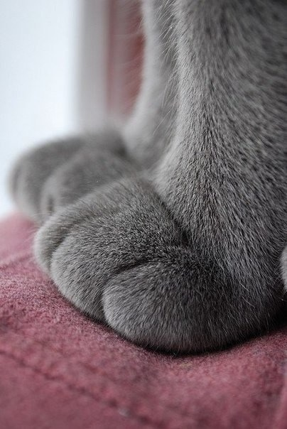 Feeling a bit down today? No worries, just look at these cat paws: