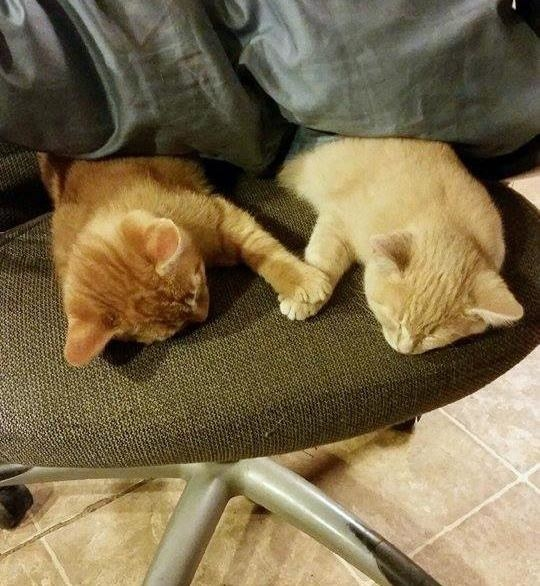 And these kitties, who want to hold each other's paws while they sleep.