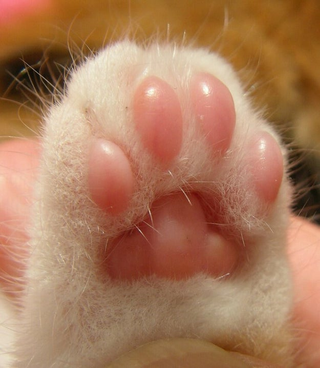Or you like looking at the little pink toe beans: