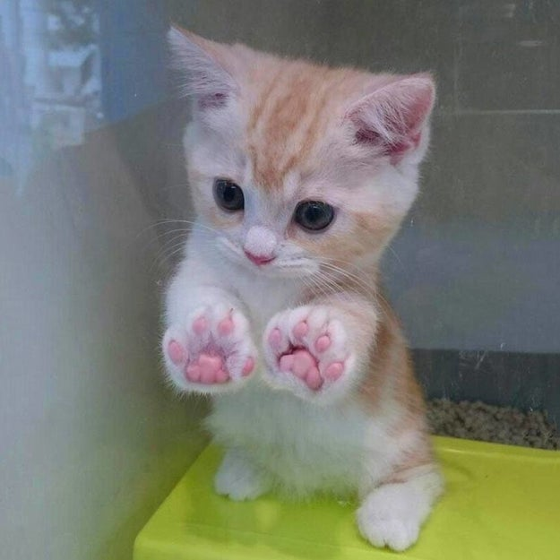 Or these paws that want to give you a double high-five:
