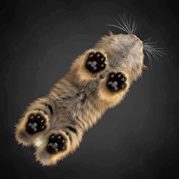 Take a look at these paws from underneath: