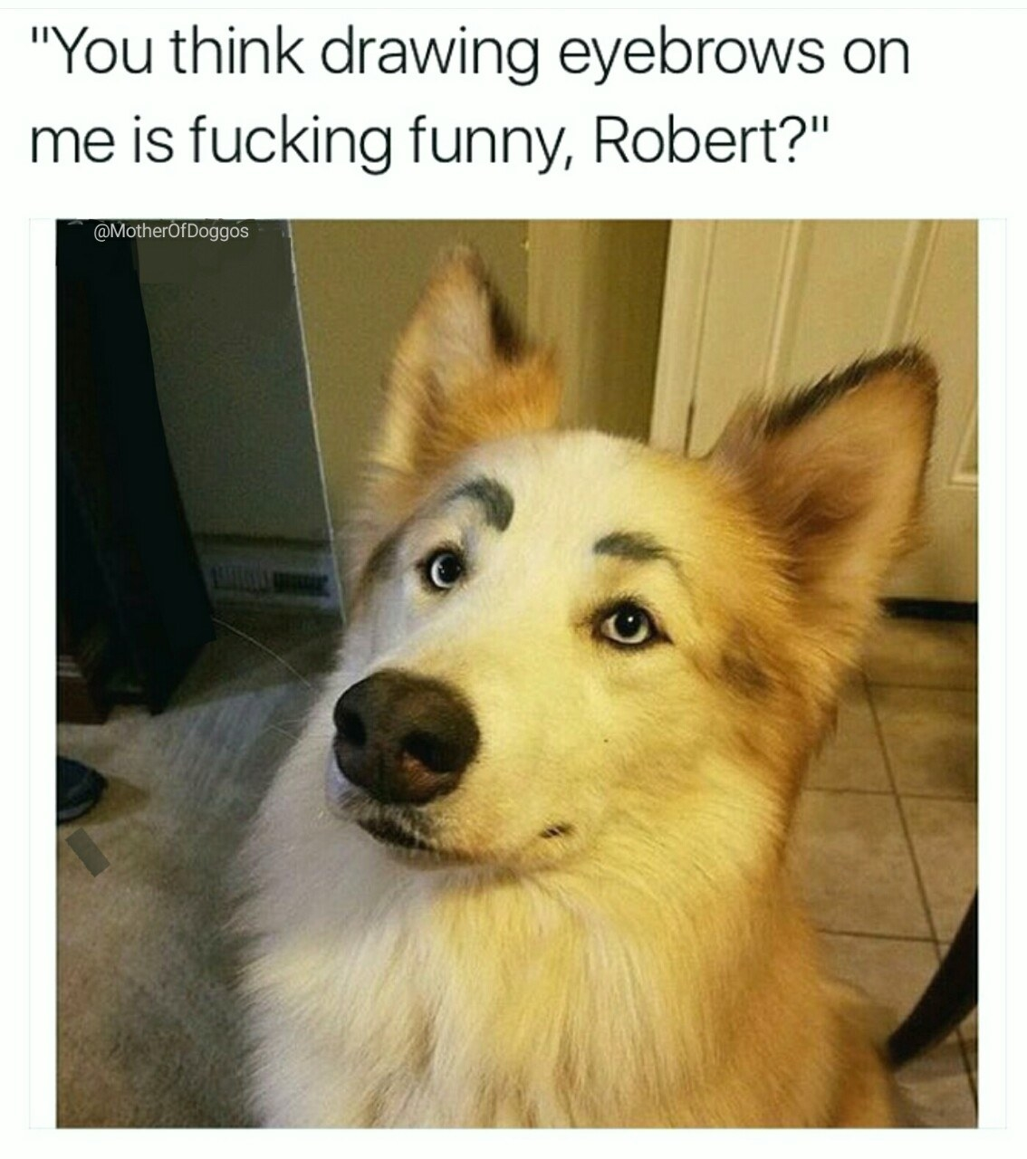 21 Memes You Should Send To Your Dog