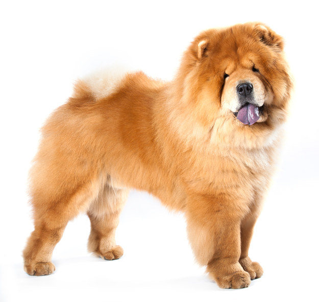 Guess The Dog Breed Buzzfeed