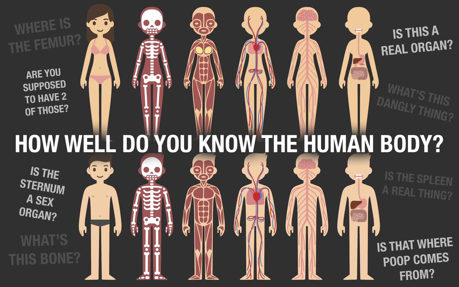 Human Body Diagram For Exam Illustration Of Wiring Diagram