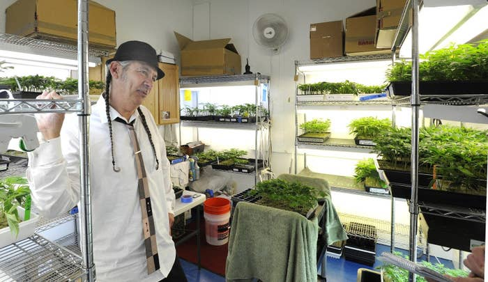 Harborside Health Center founder Steve DeAngelo in a grow room for clone plants.