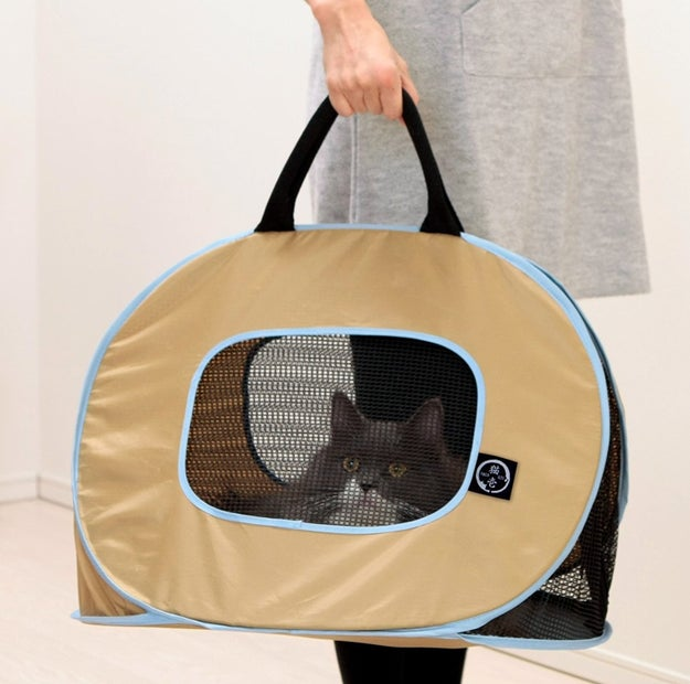 A lightweight, easy-to-clean cat (or small dog) carrying case.