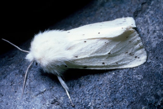 And this one, rocking a winter white cape with fur trim: